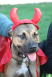 Dyker Dog parade_006.JPG