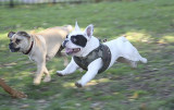 Dyker Dog parade_019.JPG