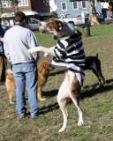 Dyker Dog parade_021.JPG