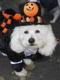 Bay Ridge Halloween_017.JPG