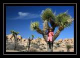 Norah and her Joshua tree