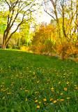 Green Grass, Yellow Flowers