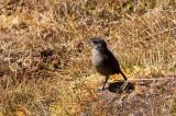 Moorland Chat