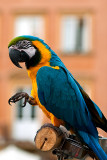 Dancing Parrot