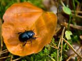 Leaf's Resident