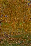 Rain Of Leaves
