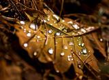 Raindrops Will Fall