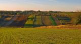 Western Roztocze Fields