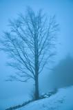 Blue Evening Fog