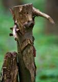 Sad One-Eyed Horned Monster