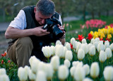White Tulips Shooting