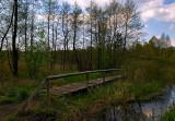 Kampinoski Forest