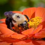 Prescott Park Bee