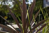 Plant @f8 M8