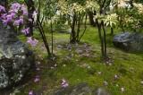 Tsutsuji of a garden in Kyoto @f4 D700