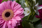 Flowers @f8 5D