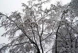 2008-Jan-01 snow @f6.3 M8