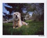 The Wonderdog