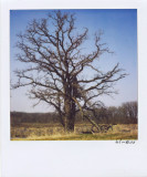 ATree For Earth Day