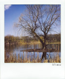 Willow Tree Island