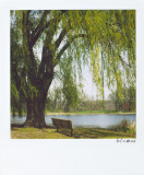 Bench and Willow