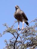 BIRD - GOS_CA (8).JPG
