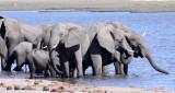 ELEPHANT - AFRICAN ELEPHANT - CHOBE NATIONAL PARK BOTSWANA (7).JPG