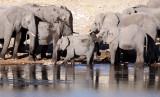ELEPHANT - AFRICAN ELEPHANT - ETOSHA NATIONAL PARK NAMIBIA (10).JPG