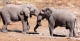 ELEPHANT - AFRICAN ELEPHANT - ETOSHA NATIONAL PARK NAMIBIA (104).JPG