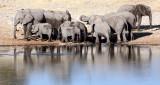 ELEPHANT - AFRICAN ELEPHANT - ETOSHA NATIONAL PARK NAMIBIA (6).JPG