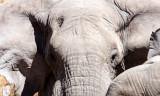 ELEPHANT - AFRICAN ELEPHANT - ETOSHA NATIONAL PARK NAMIBIA (73).JPG