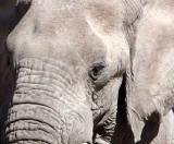 ELEPHANT - AFRICAN ELEPHANT - ETOSHA NATIONAL PARK NAMIBIA (75).JPG