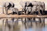 ELEPHANT - AFRICAN ELEPHANT - ETOSHA NATIONAL PARK NAMIBIA (9).JPG