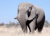 ELEPHANT - AFRICAN ELEPHANT - ETOSHA NATIONAL PARK NAMIBIA.JPG