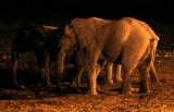 ELEPHANT - AFRICAN ELEPHANT - NIGHT AT WATERHOLE - ETOSHA NATIONAL PARK NAMIBIA (2).JPG