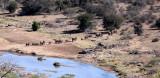 ELEPHANT - AFRICAN ELEPHANT - OLIFANT - KRUGER NATIONAL PARK SOUTH AFRICA (6).JPG