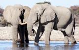 ELEPHANT - AFRICAN ELEPHANT - WHITE DESERT FORM - ETOSHA NATIONAL PARK NAMIBIA (11).JPG