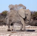 ELEPHANT - AFRICAN ELEPHANT - WHITE DESERT FORM - ETOSHA NATIONAL PARK NAMIBIA (29).JPG