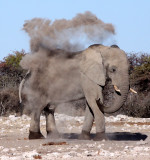 Elephants of Southern Africa