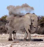 ELEPHANT - AFRICAN ELEPHANT - WHITE DESERT FORM - ETOSHA NATIONAL PARK NAMIBIA (30).JPG
