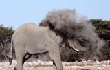 ELEPHANT - AFRICAN ELEPHANT - WHITE DESERT FORM - ETOSHA NATIONAL PARK NAMIBIA (41).JPG
