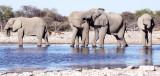 ELEPHANT - AFRICAN ELEPHANT - WHITE DESERT FORM - ETOSHA NATIONAL PARK NAMIBIA (8).JPG