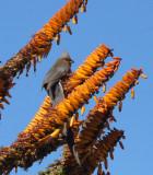 BIRD - LOU_CA (2).JPG