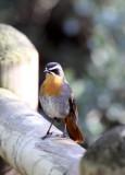 BIRD - ROB_RY (4).JPG