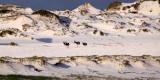 BOVID - BLESBOK - WEST COAST NATIONAL PARK SOUTH AFRICA (28).JPG