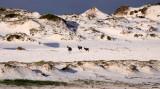 BOVID - BLESBOK - WEST COAST NATIONAL PARK SOUTH AFRICA (30).JPG