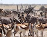 BOVID - ORYX - GEMSBOK - ETOSHA NATIONAL PARK NAMIBIA (47).JPG