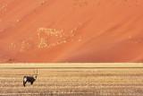 BOVID - ORYX - GEMSBOK - SOSSUSVLEI NAMIB NAUKLUFT NATIONAL PARK NAMIBIA (3).JPG