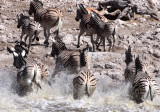 EQUID - ZEBRA - BURCHELL'S ZEBRA - ETOSHA NATIONAL PARK NAMIBIA (46).JPG