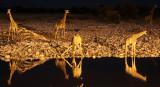 GIRAFFE - ANGOLAN GIRAFFE - AT NIGHT AT WATERHOLE - ETOSHA NATIONAL PARK NAMIBIA (7).JPG